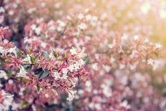 Bei fiori fatti con i filtri colorati Immagine Stock Libera da Diritti