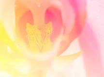 Bei fiori fatti con i filtri colorati per fondo Fotografie Stock