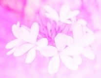 Bei fiori fatti con i filtri colorati per fondo Fotografia Stock