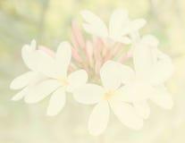 Bei fiori fatti con i filtri colorati per fondo Immagini Stock