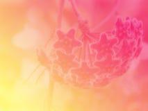 Bei fiori fatti con il fondo dei filtri colorati Immagine Stock