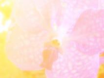 Bei fiori fatti con il fondo dei filtri colorati Fotografia Stock