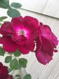 Bei fiori, fiori, fiori! Fotografia Stock Libera da Diritti
