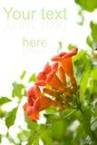 Bei fiori freschi fotografia stock libera da diritti