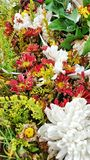 Bei fiori freschi Fotografia Stock