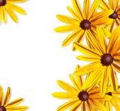 Bei fiori gialli. Fotografie Stock
