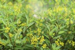 Bei fiori gialli, fiori in giardini pubblici fotografie stock