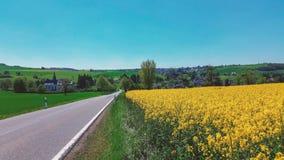 Bei fiori gialli piantati nel giardino immagini stock libere da diritti