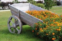 Bei fiori gialli in un carretto di legno Immagine Stock Libera da Diritti