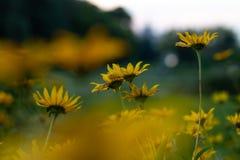 Bei fiori in giardino Immagini Stock Libere da Diritti