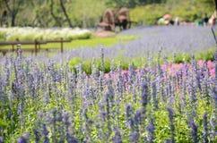 Bei fiori in giardino Immagini Stock