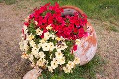Bei fiori in greco il greco antico Fotografie Stock Libere da Diritti