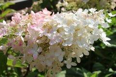 Bei fiori luminosi Fotografia Stock
