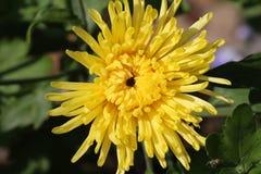 Bei fiori luminosi Immagini Stock Libere da Diritti