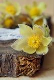 Bei fiori 8 marzo carta del giorno delle donne Bucaneve del mazzo su fondo di legno Fotografia Stock
