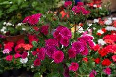 Bei fiori in natura fotografia stock
