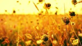 Bei fiori nel campo sul fondo di alba Mattina luminosa all'aperto soleggiata video d archivio