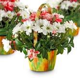 Bei fiori nel canestro Immagini Stock Libere da Diritti