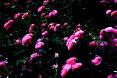 Bei fiori nel giardino fotografia stock