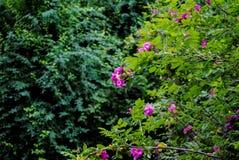 Bei fiori nel parco Sofiyivka fotografia stock