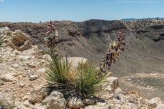 Bei fiori porpora dell'yucca che fioriscono vicino alla cresta del Meteor Crater nell'alto deserto dell'Arizona del Nord immagine stock libera da diritti