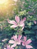 Bei fiori porpora selvaggi Immagine Stock