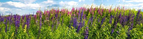 Bei fiori porpora su un prato rurale fotografie stock libere da diritti
