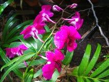Bei fiori rosa fotografie stock libere da diritti