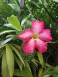Bei fiori rosa fotografie stock