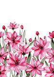 Bei fiori rosa con i gambi verdi e foglie su fondo bianco Reticolo floreale senza giunte Pittura dell'acquerello illustrazione vettoriale