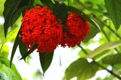 Bei fiori rossi Fotografia Stock