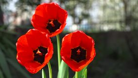 Bei fiori rossi a casa archivi video