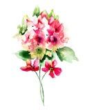 Bei fiori rossi dell'ortensia illustrazione vettoriale