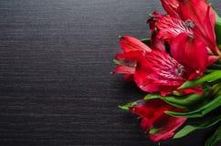 Bei fiori rossi di Alstroemeria su di legno nero Fotografia Stock Libera da Diritti