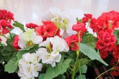 Bei fiori rossi e bianchi artificiali dell'ortensia Fotografia Stock