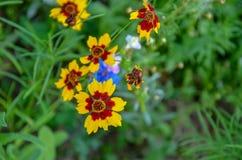 Bei fiori rossi piantati nel giardino Giardino con molti fiori rossi immagini stock libere da diritti
