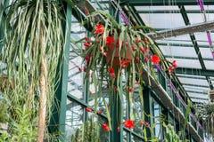 Bei fiori rossi in serra Fotografie Stock