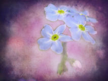 Bei fiori selvaggi Fotografie Stock
