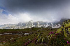 Bei fiori selvaggi in alte montagne Fotografie Stock