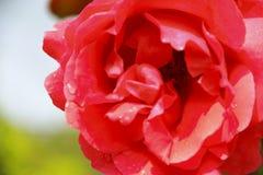 Bei fiori sotto Sanya, Cina immagini stock