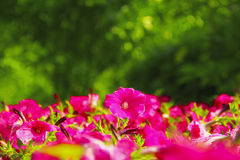 Bei fiori sotto Sanya, Cina fotografie stock