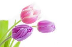Bei fiori su priorità bassa bianca Fotografie Stock Libere da Diritti
