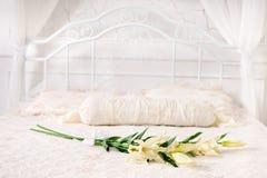 Bei fiori sul letto Fotografia Stock