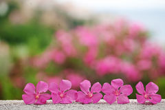 Bei fiori sul pavimento Fotografia Stock