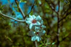 Bei fiori sulla molla dell'albero Immagine Stock