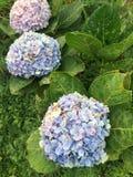 Bei fiori sulla montagna Immagine Stock