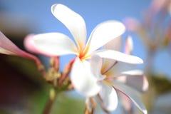 Bei fiori tropicali Immagine Stock Libera da Diritti