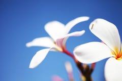 Bei fiori tropicali Fotografia Stock Libera da Diritti