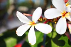 Bei fiori tropicali Fotografia Stock