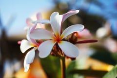 Bei fiori tropicali Fotografie Stock Libere da Diritti